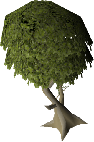 File:Mature juniper tree.png