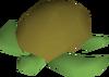 Raw sea turtle detail