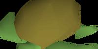 Raw sea turtle