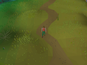 Hot cold clue - Lumbridge Swamp
