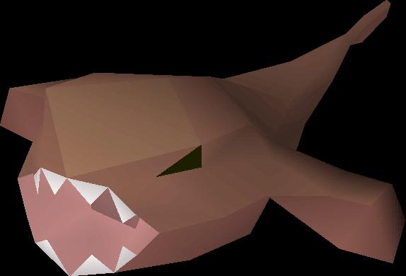Raw monkfish detail