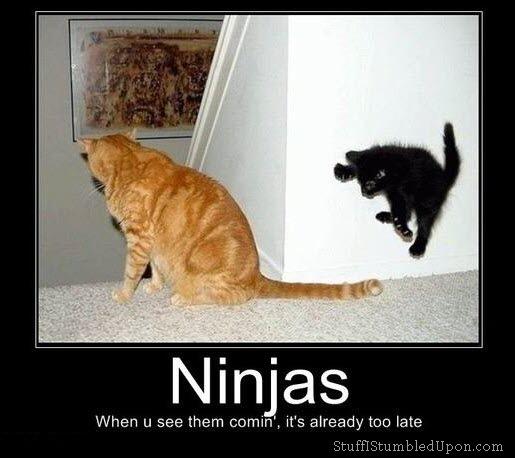 File:Ninja cat.jpg