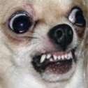 File:Angrydog.jpg
