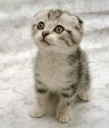 File:A aaa-Cute-Cat-3.jpg