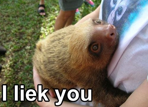 File:I-liek-like-you-sloth.jpg