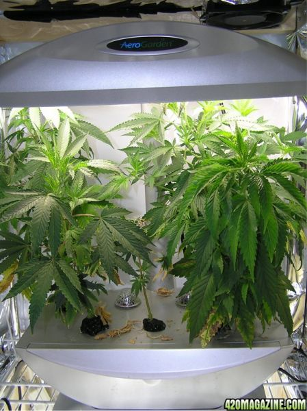 Medical Marijuana Aerogarden Gardeners Wiki Fandom powered by