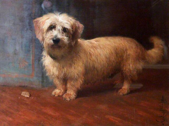 File:Baird dog A Dandy Dinmont, Called 'Scotty', Monty Miller's Dog.jpg