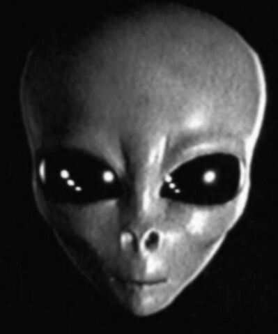 File:Grey Alien head.jpg