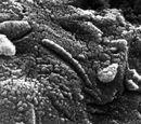 Extraterrestrial bacteria