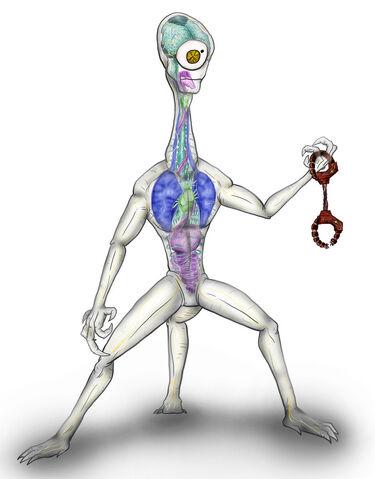 File:Animorphs Races Orff by Monster Man 08.jpg