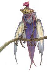 Jubba Bird
