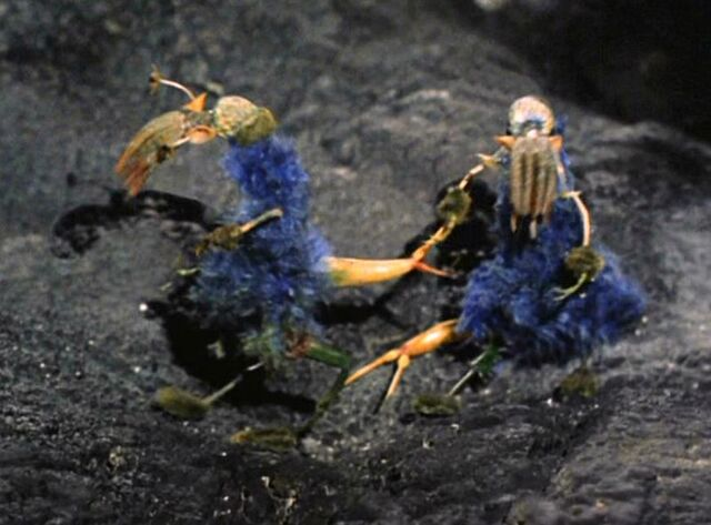 File:Ornithoid Lifeforms.jpg