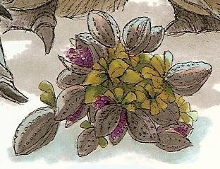 File:Lahdia Plant.jpg