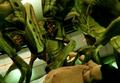 Aliens GTAV.png