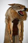 CoyoteSkinHood