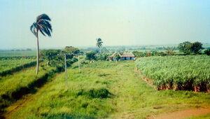 Cuban Plantation