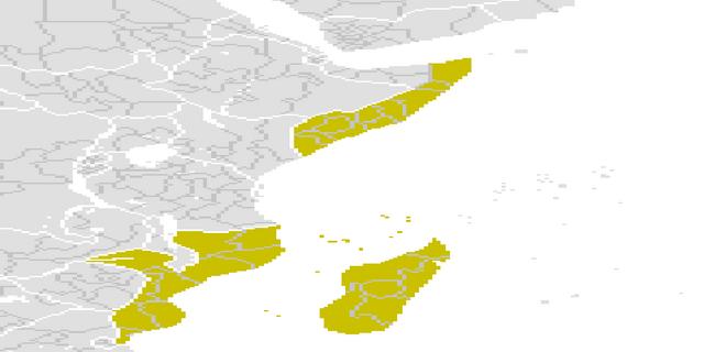 File:YellowMadagascar3.png