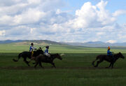 Three Naadam riders