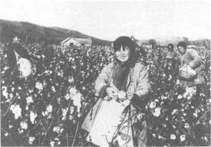 Early chinese cotton picking