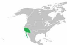QI 1920 California