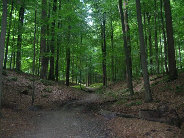 File:Sonian forest.JPG