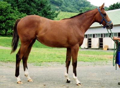 File:Karabakh-horse-today.jpg