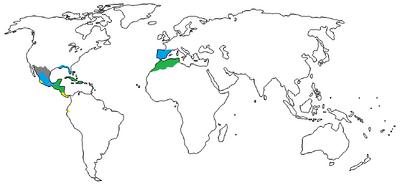 1510 A.D.