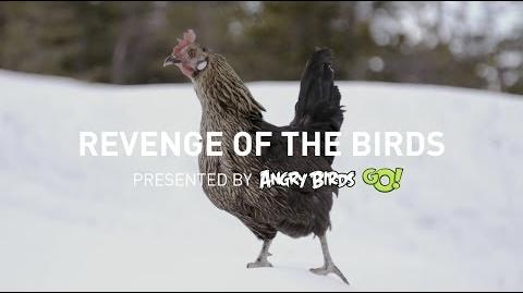 Revenge of the Angry Birds (on humans)