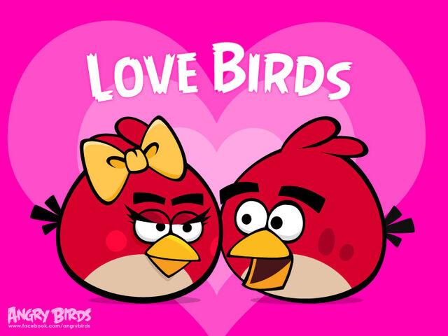 File:Lovebird2.jpg