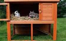 Pet-rabbit 2470120c