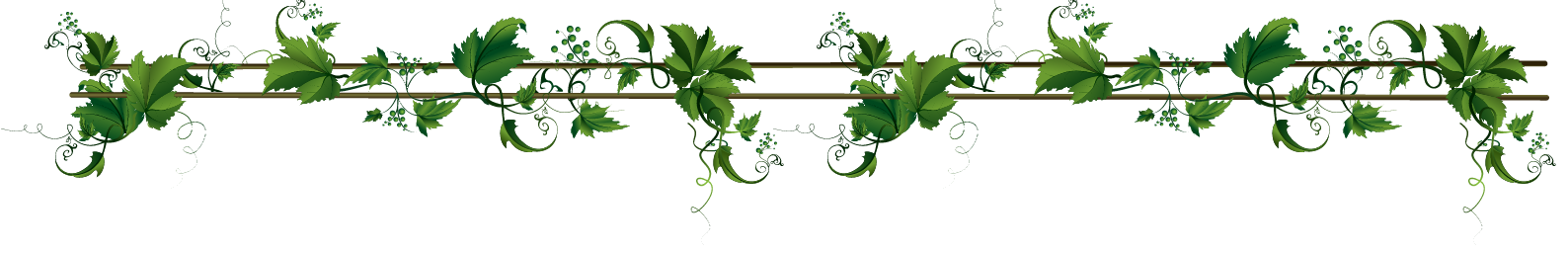 The gallery for --> Rose Vine Border Png