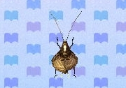 Bell cricket encyclopedia (New Leaf)
