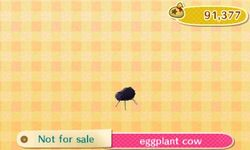Eggplant Cow Catalog