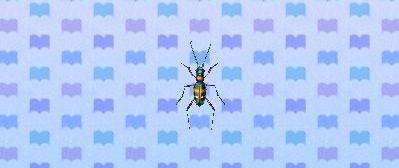 File:Tiger beetle.png