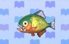 Piranha encyclopedia (New Leaf)