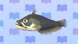 Catfish encyclopedia (New Leaf)
