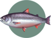 King Salmon (City Folk)