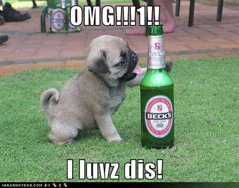 File:Funny-dog-pictures-pug-loves-beer.jpg