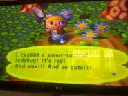 Seven Spotted Ladybug AC PG