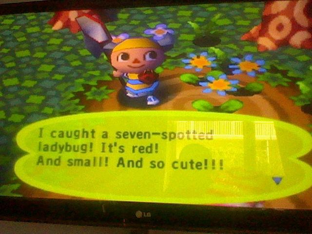 File:Seven Spotted Ladybug AC PG.JPG