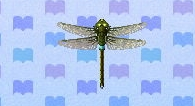 Darner dragonfly encyclopedia (New Leaf)