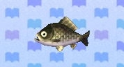 Crucian carp encyclopedia (New Leaf)