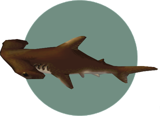 Hammerhead shark - Animal Crossing Wiki