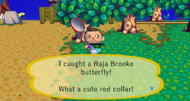 File:Raja Brooke Butterfly Caught In CF.JPG