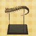 File:T rex tail (new leaf).jpg