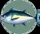 Tuna (City Folk)