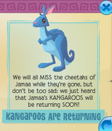 Kangaroos are returning
