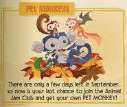 Pet monkeys
