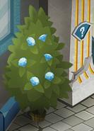 Diamond-Shop Diamond-Plant