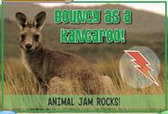 Kangaroojag